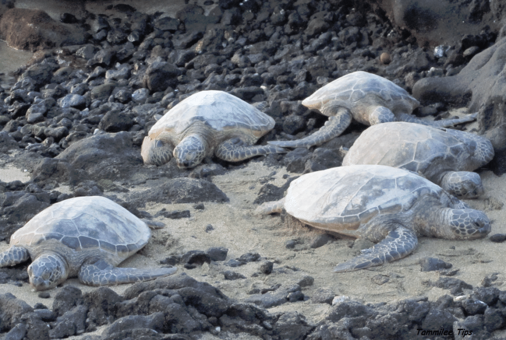 Turtles Resting on the beach