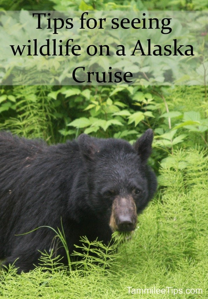 Tips for seeing wildlife on a alaska cruise