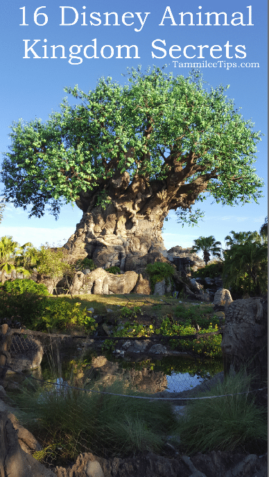 16 Disney Animal Kingdom Secrets