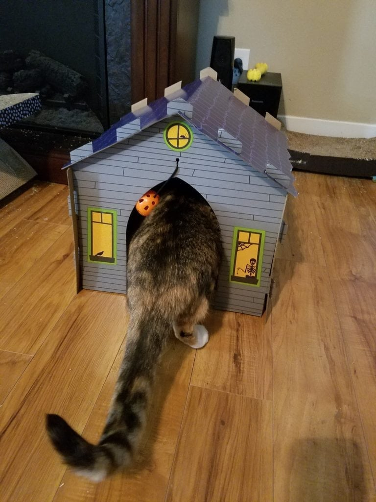 kitty kitty in the haunted house