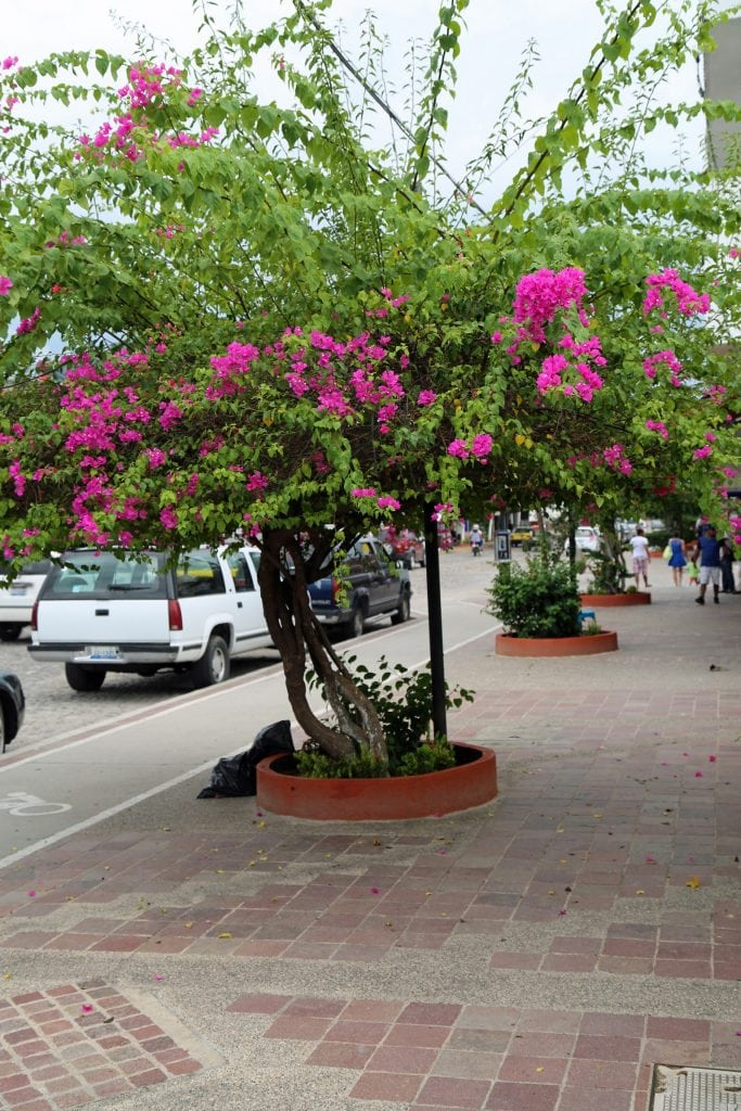 sidewalks-of-puerto-vallarta-mexico